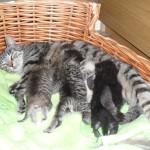 Två veckor gamla diar de fyra kattungarna mamma Elsa