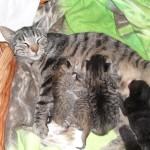 En vecka gamla kattungar diar