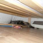 Kattmamman Elsa med ungarna under sängen.Under sängen är alltid tryggast. Under just denna sängen har alla katterna gömt sig när de var nykomlingar.
