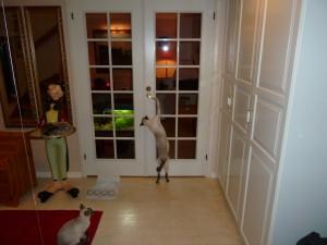 Viile är en händig karl som själv kan öppna dörrar.