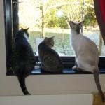 Stinaponken, Putte och Viile i köksfönstret. När Putte var liten.