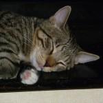 Putte sover med tungan på vädring, beredd att börja tvätta dig.