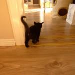 Nora på promenad i huset