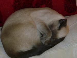 Bonnie sover