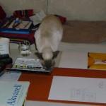 Min bok blir till: boken om Bonnie Katt