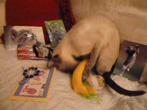 Kattmynta är det bästa som finns. Tänk en banan full med väldoftande kattmynta. Det är lycka.