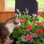 Stina älskar blommor