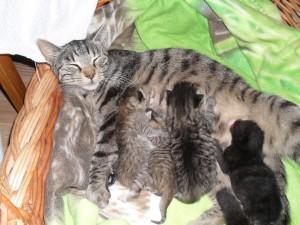 Nyfödd Putte med syskonen och mamma Elsa
