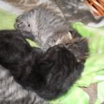 Fyra småttingar sover