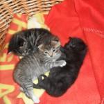 Hedvig, Putte och Nora 3 veckor