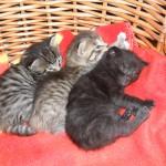 Hedvig, Putte och Nora ska sova
