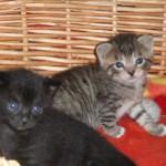 Nora och Putte. Deras ögon är fortfarande alldeles blå.