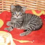 Liten söt Hedvig 4 veckor gammal