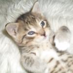 En alldeles underbar liten Putte med blå ögon