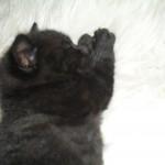 Nora sover gott