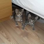 Putte och Hedvig under sängen