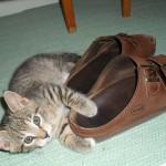 Putte älskar husses skor!
