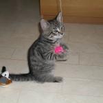 Hedvig leker helst ensam, här har hon en boll som hänger i ett gummiband i trappan.