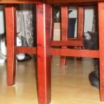 Lilla modiga Nora träffar den stora katten Stinaponken
