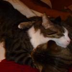 Putte kramar Stinaponken