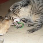 Liten Hedvig leker med armband från Kitty