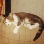 1979 kom Maja från Djurens Vänner. Liten och skygg. Men du fanns med oss många år och var högt älskad av oss alla.