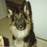 1989 kom en liten långhårig valp till oss. Zentha, husses och allas älskling. Vi var inte bra på hundar men du var bra på människor. Du väntar på husse, det vet vi.