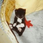 1993 Bambina, Missans dotter, skulle stanna och bli Catharinas katt. Men du ville flytta till grannarna och där var du älskad tills du gick bort.