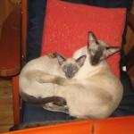 Bonnie och Viile