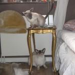 Bonnie och Viile (4)
