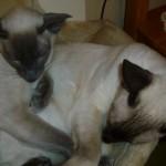 Bonnie och Viile (5)