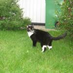 Bambina, Missans dotter. Catharinas katt som vi behöll men som valde att flytta till våra grannar. Vi hade delad vårdnad men det var hos Eddy, Lena och Sara hon hade sitt hjärta och det är dem hon väntar på.