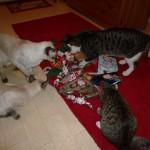 En säck med små paket till katterna från deras vänner