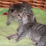 Putte får en puss av sin lilla tvilling som öppnat sina blå ögon och bara hann få en liten skymt av världen. Strax efter gick den lilla bort, två veckor ung.