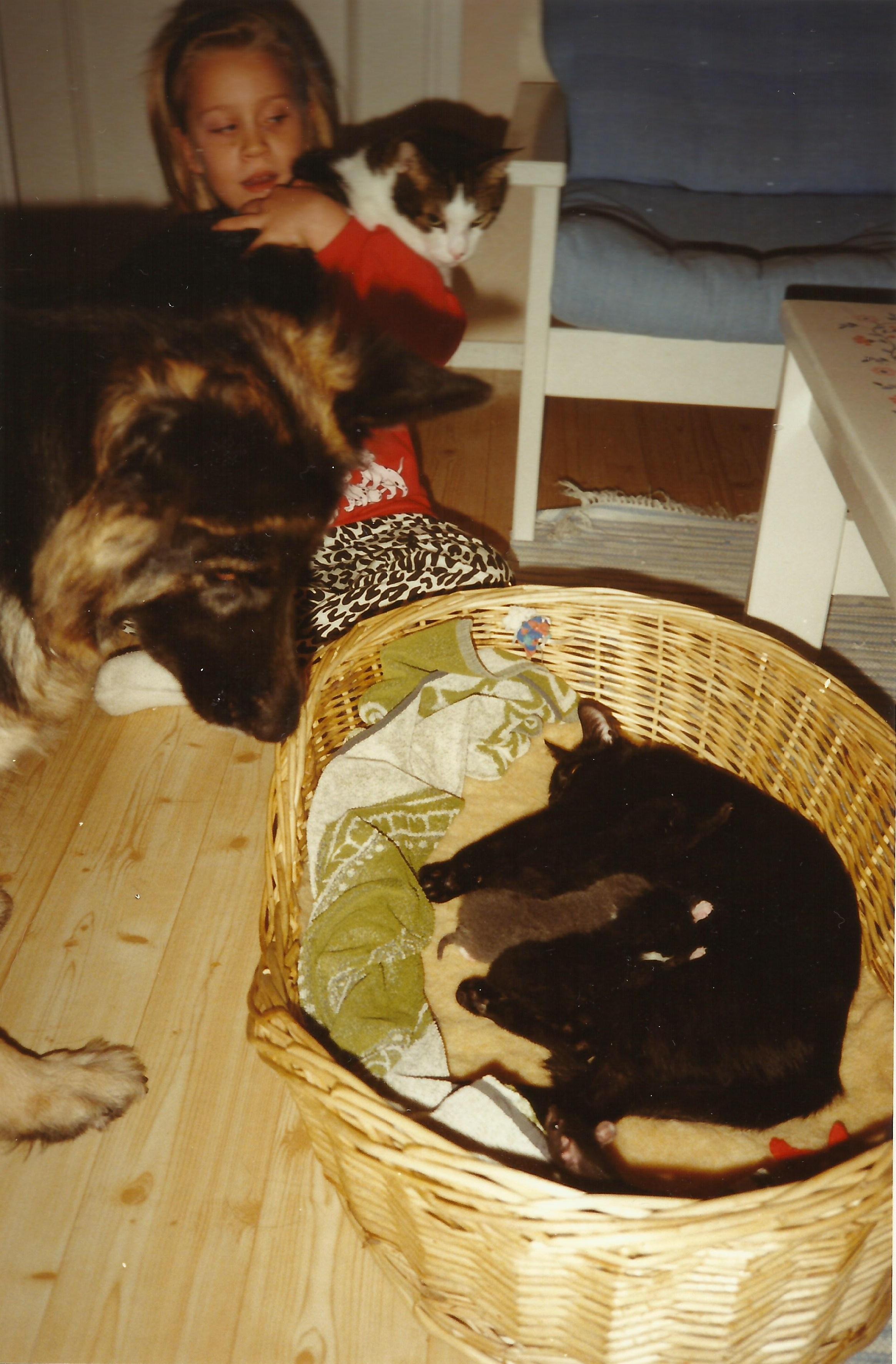 dec 1993 Familjefoto av Missan och barnen med Fjant, Zentha och längst ner i korgen lille Movve. Lillmatte Catharina håller Fjant.