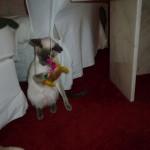 Bonnie gillar Puttes present och han delar gärna med sig