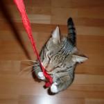 Putte leker med ett band från Kitty