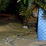 Är det inte Putte där under granen, bakom paketet?