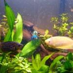 Vad är du för nån jeppe? En blå bläckfisk i vårt akvarium!
