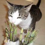 Stina har fått kattmyntaplantor i posten från vännen Lillen i Huddinge