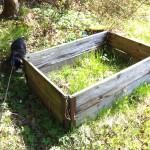 Stina hittar planteringsbädd. Eller är det en jättestor kattlåda?