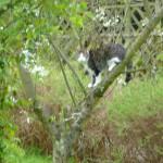 Stina i körsbärsträdet