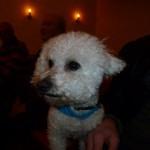 Charlie är välkommen i kyrkan på Djurens Dag