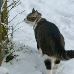 Stina i snön
