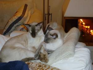 Bonnie och Viile håller tass