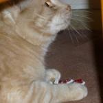 Gunnar med leksaken från Kitty